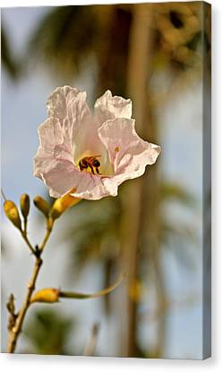 Bee In Paradise Canvas Print by Felix Zapata