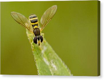 Bee On Belief  Canvas Print by Dean Bennett