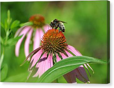 Canvas Print featuring the photograph Bee On Pink Flower by Jodi Terracina