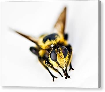 Bee Canvas Print by Susan Leggett