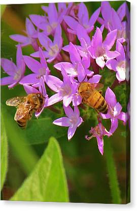 Canvas Print featuring the photograph Bees One by Craig Wood