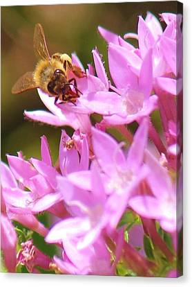 Canvas Print featuring the photograph Bees Two by Craig Wood