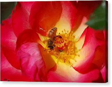 Beetobee Canvas Print by Don Wright