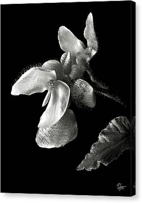 Begonia In Black And White Canvas Print by Endre Balogh