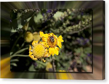 Behave Canvas Print by Charles Warren