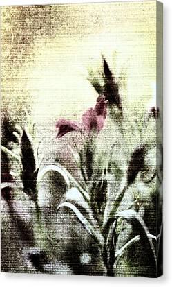 Behind The Garden Gate Canvas Print by Bonnie Bruno