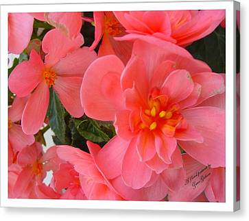 Canvas Print featuring the photograph Behold My Beauty by Frank Wickham