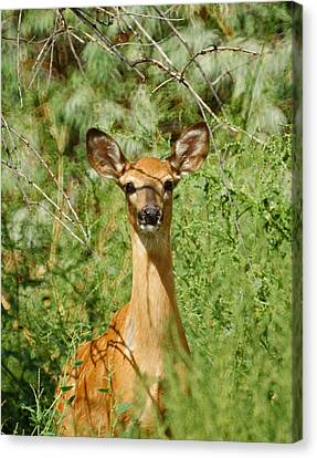 Fountain Creek Nature Center Canvas Print - Being Watched by Ernie Echols