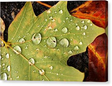 Bejeweled Leaves Canvas Print by Matthew Green