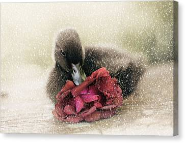 Ducklings Canvas Print - Bella In The Snow by Amy Tyler