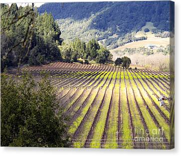 Canvas Print featuring the photograph Bella Vineyards by Leslie Hunziker