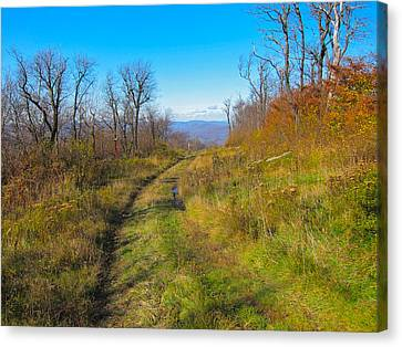 Belleayre Trail In Late Fall Canvas Print