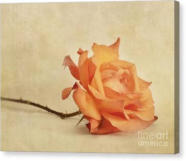 Bellezza Canvas Print by Priska Wettstein