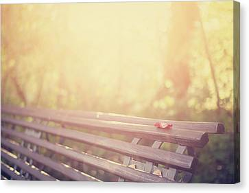 Park Benches Canvas Print - Bench In Autumn Sun by by Christopher Wesser - www.sandbox-photos.com