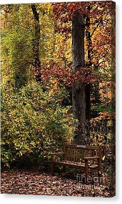Bench In The Woods Canvas Print by John Rizzuto