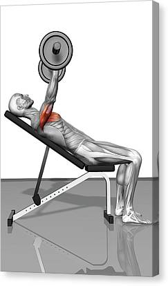 Bench Press Incline (part 1 Of 2) Canvas Print by MedicalRF.com