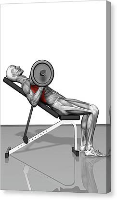 Bench Press Incline (part 2 Of 2) Canvas Print