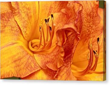 Bends And Folds Canvas Print by Deborah  Crew-Johnson
