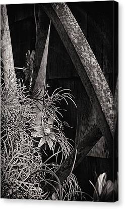 Beneath The Wheel Canvas Print by Susan Capuano