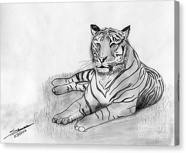 Bengal Tiger Canvas Print by Shashi Kumar