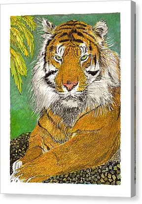 Bengal Tiger With Green Eyes Canvas Print by Jack Pumphrey