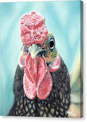 Benny The Bantam Canvas Print by Baron Dixon