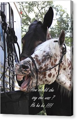 Benson Mule Day Birthday Card Photo Canvas Print by Travis Truelove