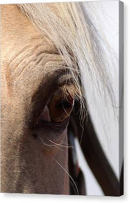 Benson Mule Days Canvas Print by Travis Truelove