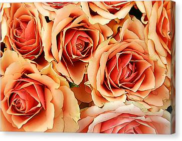 Bergen Roses Canvas Print