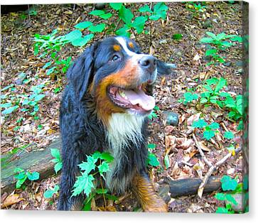 Bernese In The Woods Canvas Print