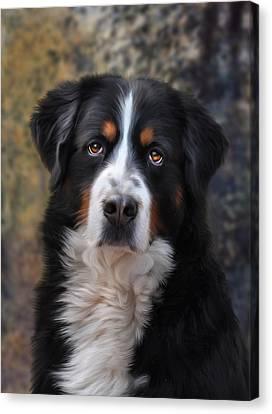 Dogs Canvas Print - Bernese Mountain Dog by Julie L Hoddinott