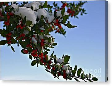 Berries In Snow Canvas Print