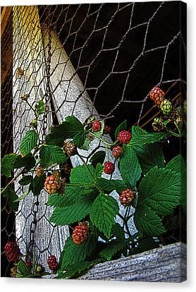 Berries Canvas Print by Jessica Brawley