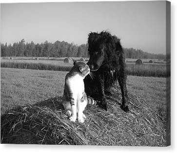 Best Buddies Black And White Canvas Print by Kent Lorentzen