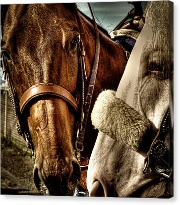 Best Of Friends Canvas Print by David Patterson
