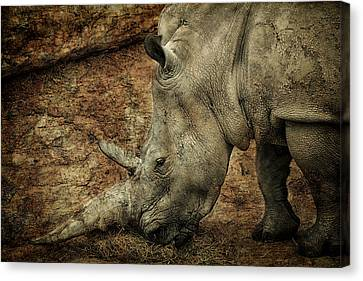Between A Rock And A Hard Place Canvas Print by Fiona Messenger
