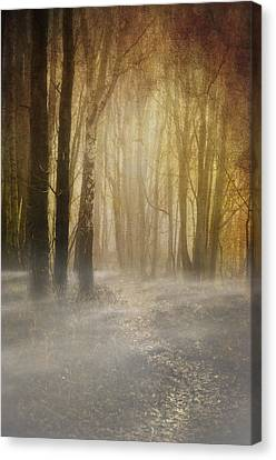 Beware Misty Woodland Path Canvas Print by Meirion Matthias