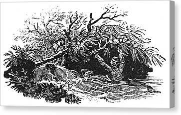 Bewick: Man Drowning Canvas Print by Granger