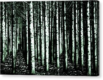 Beyond The Trees Canvas Print by Terrie Taylor