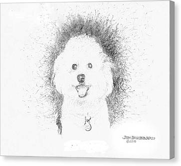 Canvas Print featuring the drawing Bichon Frise by Jim Hubbard