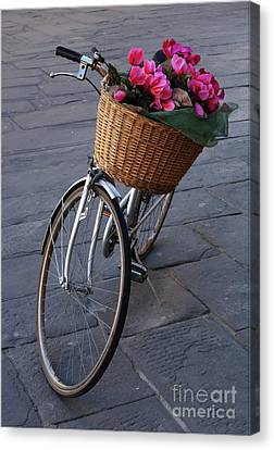 Bicycle With Flowers Canvas Print - Bicycle In Lucca Italy by Bob Christopher