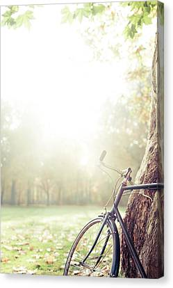 Bicycle Leaned On Big Tree In Sunlight. Canvas Print by Guido Mieth