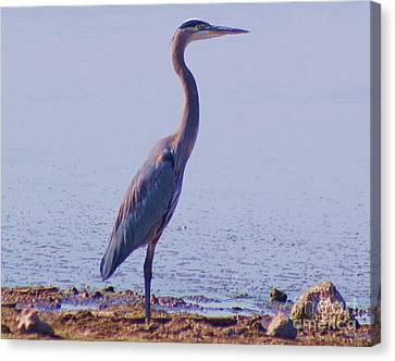 Canvas Print featuring the digital art Big Blue Heron At Lake Side by John  Kolenberg