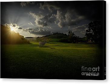 Big Buck In Field At Sunset Canvas Print by Dan Friend