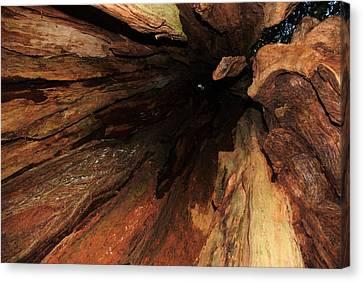 Big Cedar Canvas Print