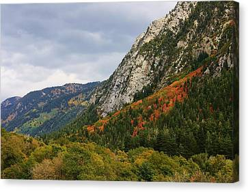 Big Cottonwood Canyon 2 Canvas Print by Bruce Bley