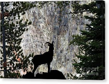 Canvas Print featuring the photograph Big Horn Sheep Silhouette by Dan Friend