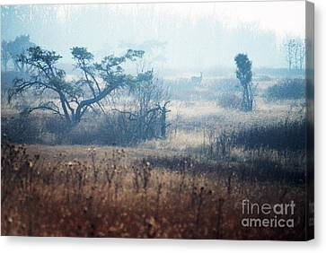 Big Meadows In Winter Canvas Print by Thomas R Fletcher