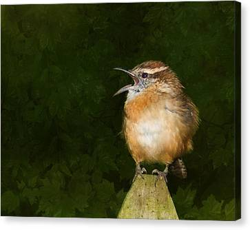 South Carolina State Bird Canvas Print - Big Mouth  by Steven Richardson