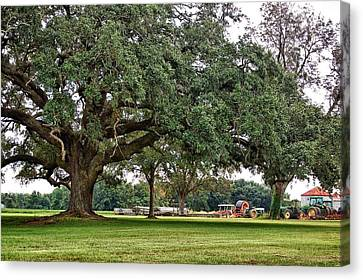 Big Oak And The Tractors Canvas Print by Michael Thomas